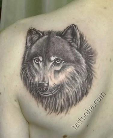 Что означает татуировка волк на лопатке