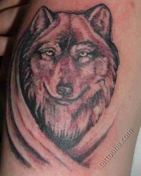 Тату волк: 234 фото татуировки, эскизы, значение мужских и женских тату.  Что означает тату (татуировка) волк | 571x456